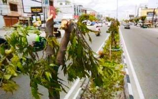 Di Duga,Terkait Kasus Tebang Pohon Di Tambusai, PUPR Pekanbaru Bantah Cabut Laporan Polisi