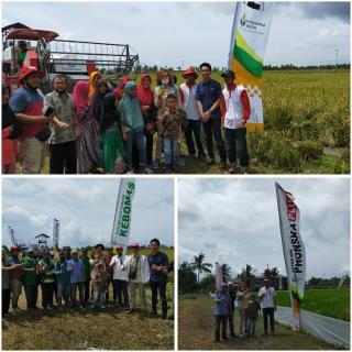 Cv Kuala Raja Sebagai Distributor Pupuk yang di Percaya Pemerintah Riau