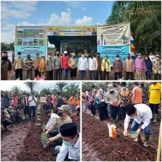 Tanam Perdana Sawit di Bengkalis, Gubernur Riau Didampingi Plh Bupati Bengkalis